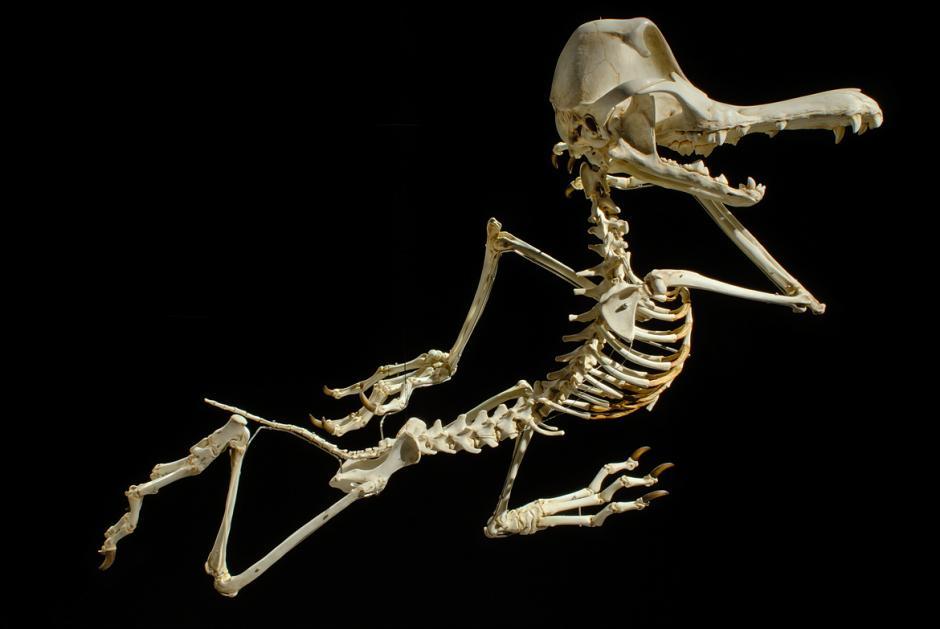 El Coyote siempre buscará la forma de darle caza al Correcaminos a toda costa.(Foto: iflscience.com)