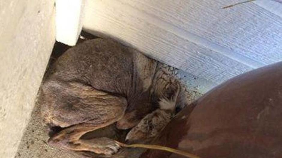 Una mujer encontró a un perrito moribundo en la puerta de su casa. (Foto: City of Folsom Animal Services)