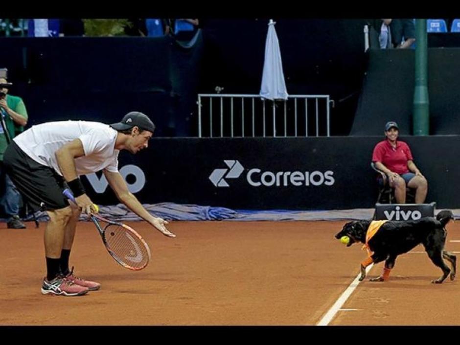 Los perros se roban el show en el abierto de Sao Paulo. (Foto: Televisa)