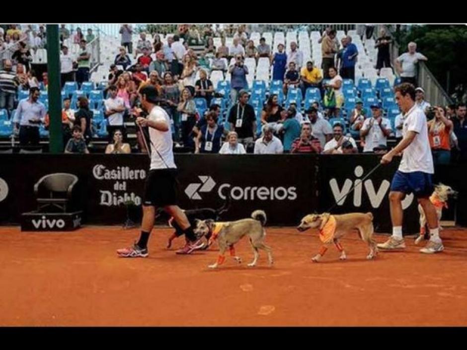 Los perros recogebalones fueron la sensación en el abierto de Sao Paulo. (Foto: Televisa)