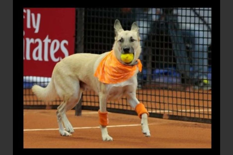 Los canes de diversas razas alcanzaron los balones en juego de exhibición. (Foto: Televisa)