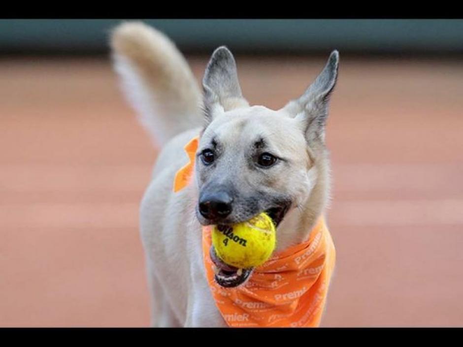 Perros rescatados se encargaron de recoger los balones en juego de exhibición. (Foto: Televisa)
