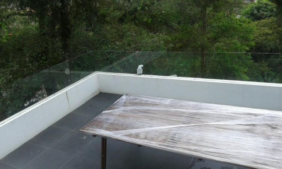 Un ave permanece en la terraza de la casa que pertenecía a Roxana Baldetti. (Foto: MP)
