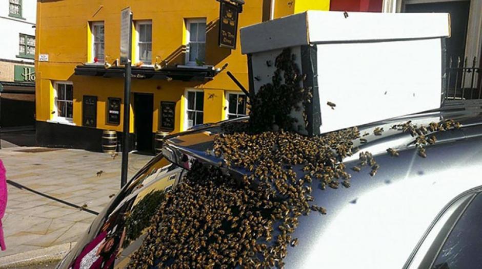 Dentro de una caja trasladaron al enjambre a su hábitat. (Foto: cronicaviva.com)