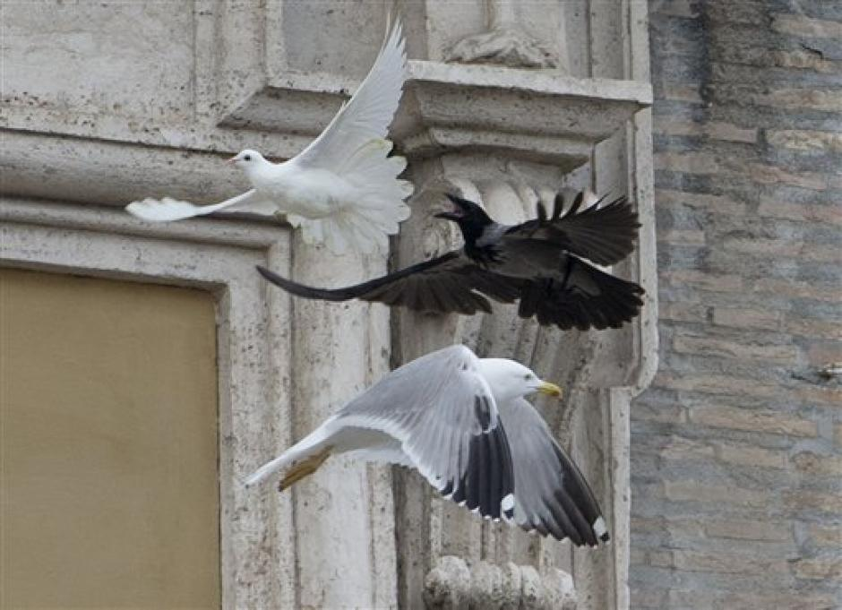 Un cuervo ataca a la paloma de la paz que el Papa Francisco había liberado momentos antes en la Plaza de San Pedro, Ciudad del Vaticano. (Foto: 20minutos.es)