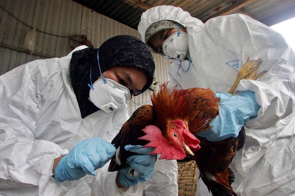 La Organización Mundial de la Salud (OMS) advierte de que el H7N9 podría convertirse en un mayor peligro
