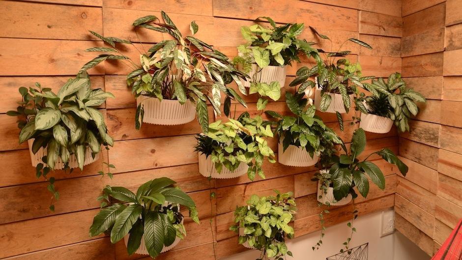 Los complementos son importantes: Libros, plantas, cojines o lámparas hacen que el ambiente sea acogedor. (Foto: Selene Mejía/Soy502)