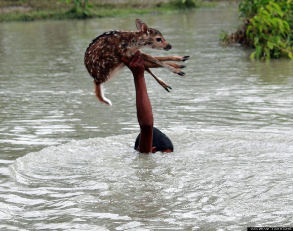 Por momentos, el muchacho quedó cubierto completamente por el agua mientras el venadito se mantenía seco. (Foto: Huffington Post)