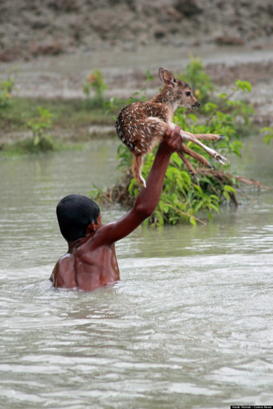 El jóven logró evitar que el venadito se ahogara en el río Noakhali de Bangladesh. (Foto: Huffington Post)