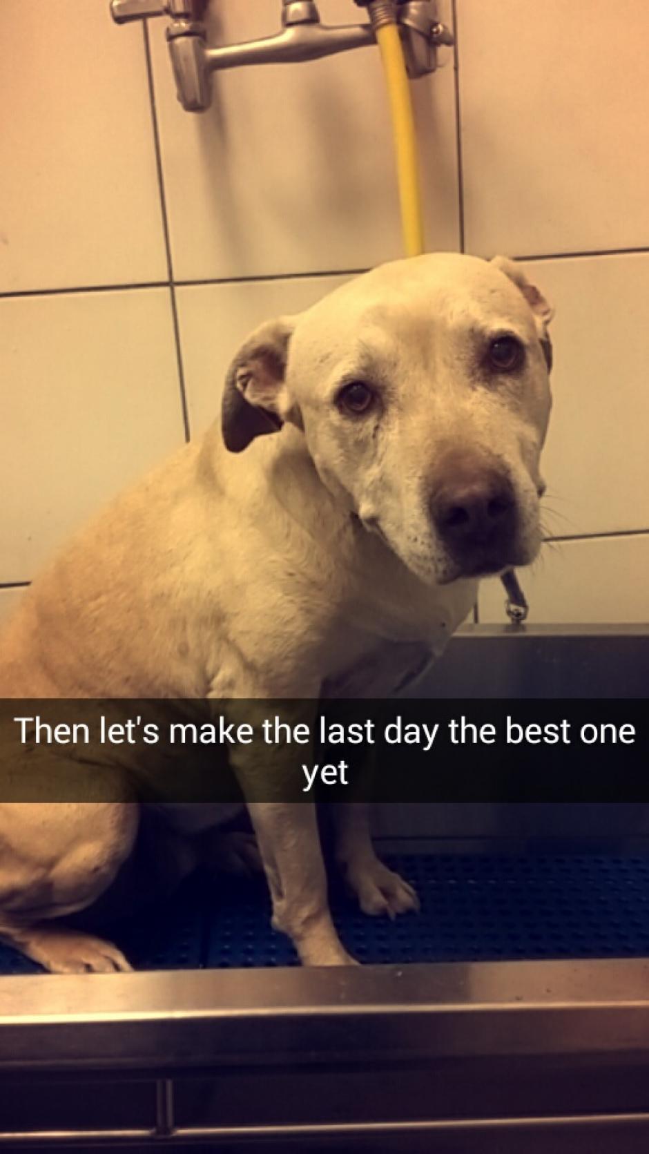 En su día de despedida Hannah fue a hacerse grooming. (Foto: Snapchat)