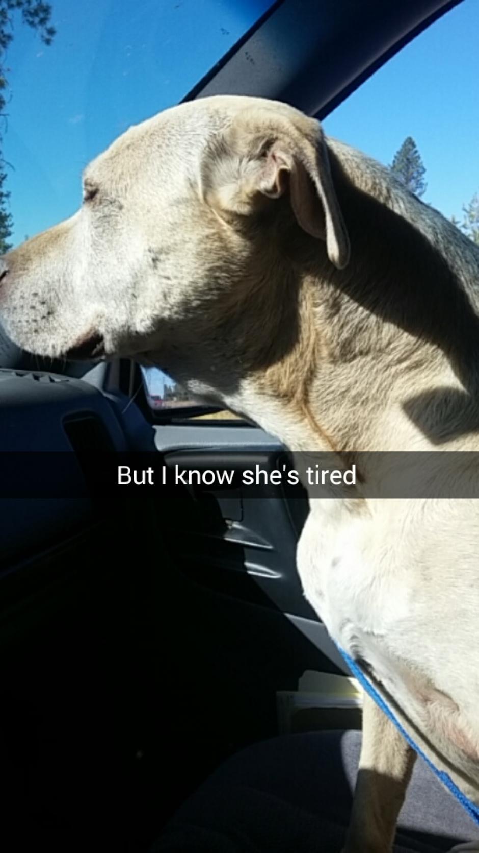 Su humana decidió darle un lindo día de despedida. (Foto: Snapchat)