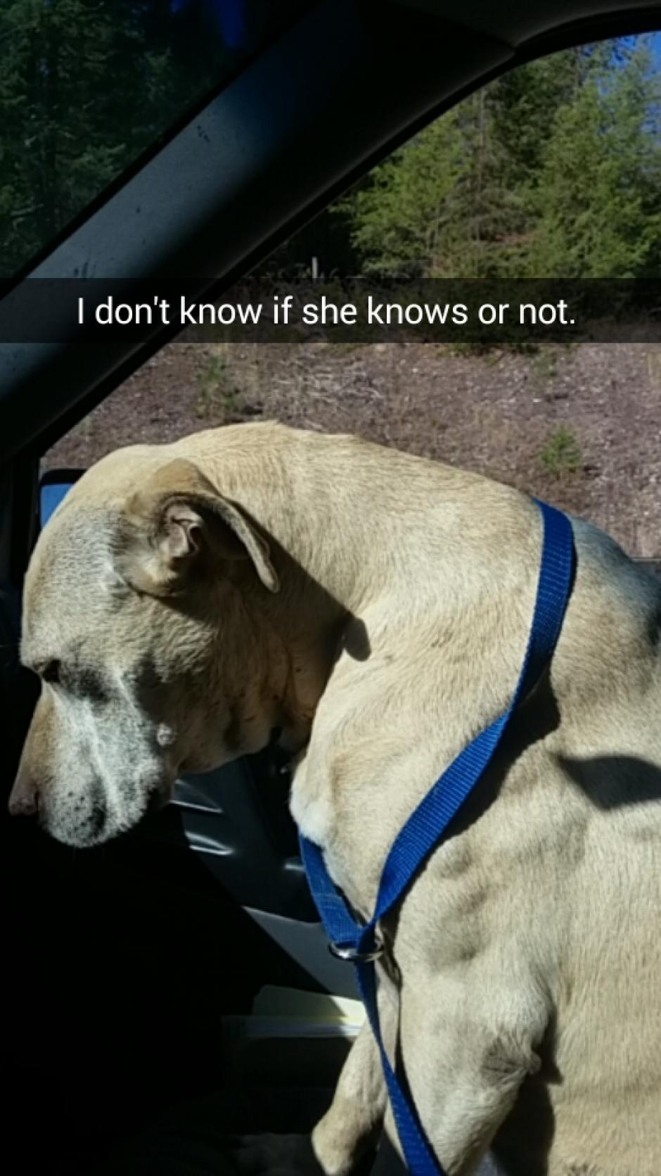 Esta perrita se llama Hannah y sufre mucho por una enfermedad. (Foto: Snapchat)