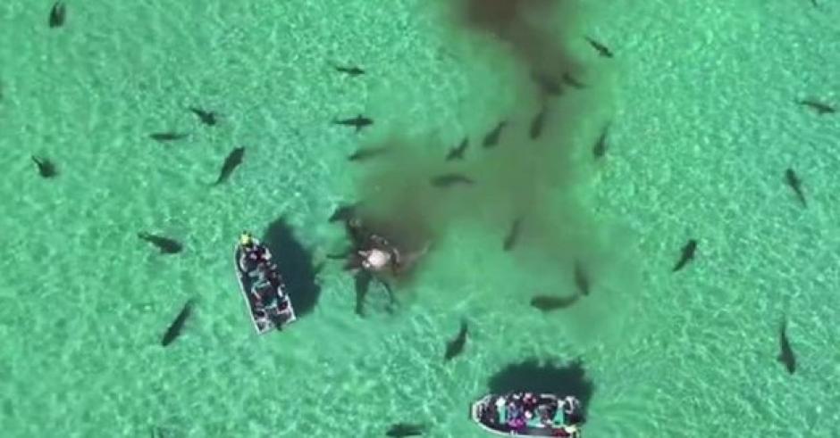 Un dron captó las espectaculares imágenes. (Foto: Captura youtube)