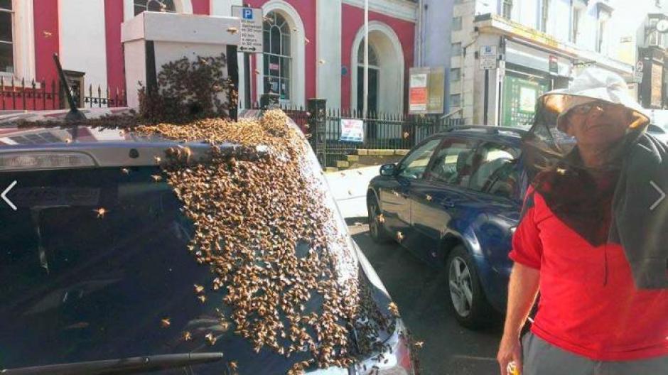 Varios curiosos evitaron acercarse para observar a las abejas de cerca. (Foto: diariopanorama.com)