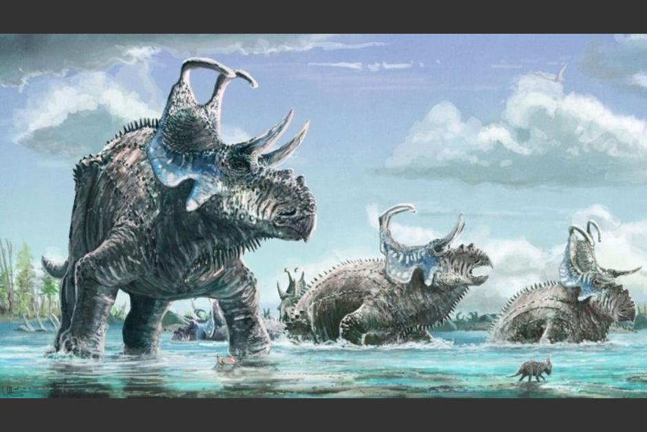 Paleontólogos hallaron en Estados Unidos una nueva especie de dinosaurio con cuatro cuernos. (Imagen: journals.plos.org)
