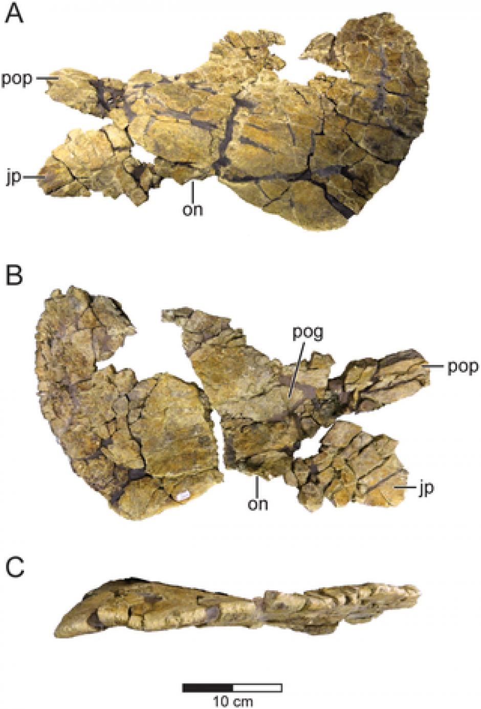 Este dinosaurio data del período Cretácico. (Imagen: journals.plos.org)