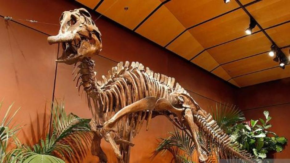 El dinosaurio pico de pato habitaba en Asia, Norteamérica y Centroamérica. (Foto: (Foto: rpp.pe)