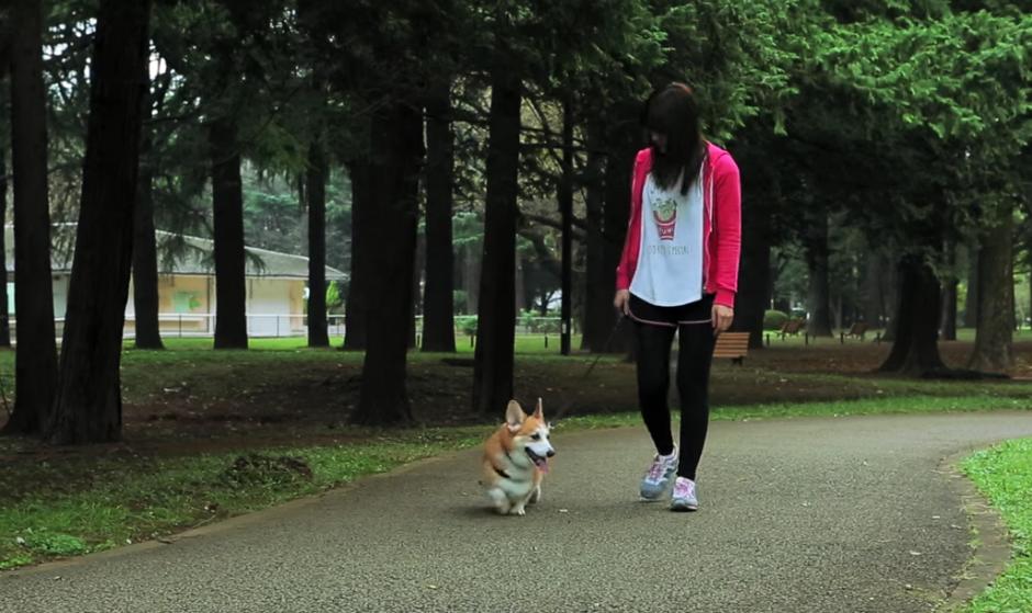 Imagina saber lo que siente tu mascota. (Youtube)