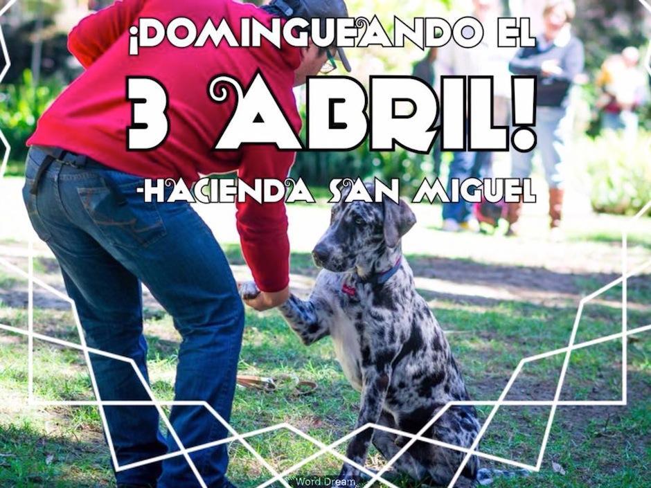 """""""Domingueando"""" es un evento de La Casona. (Foto: La Casona)"""