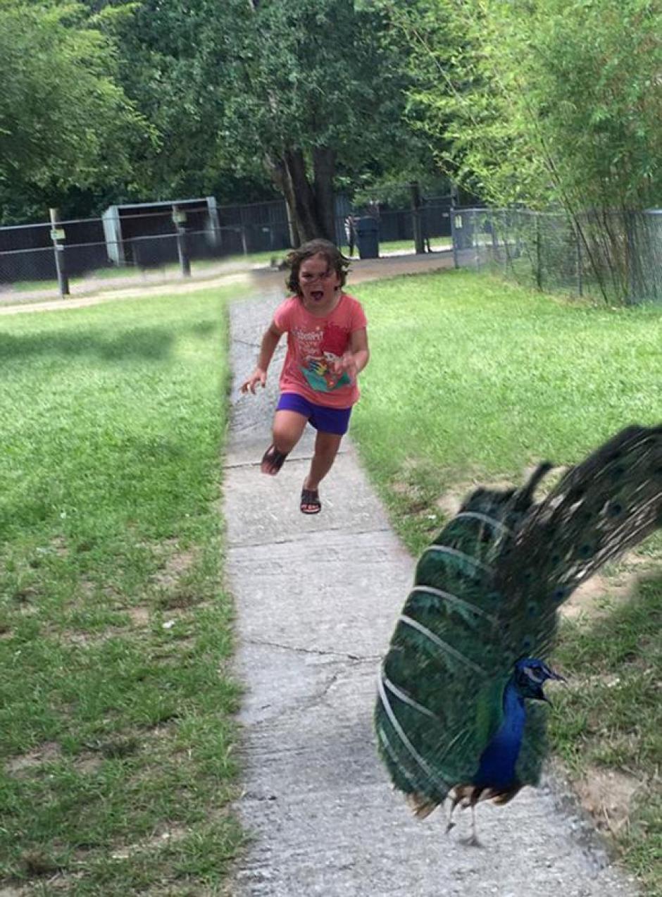 Hubo quienes le dieron vuelta a la acción, la niña corriendo al pavo real. (Foto: Infobae)