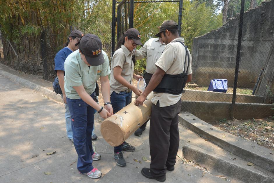 Veterinarias entregando el tubo con maní para una demostración. (Foto: Camila Chicas /Soy502)