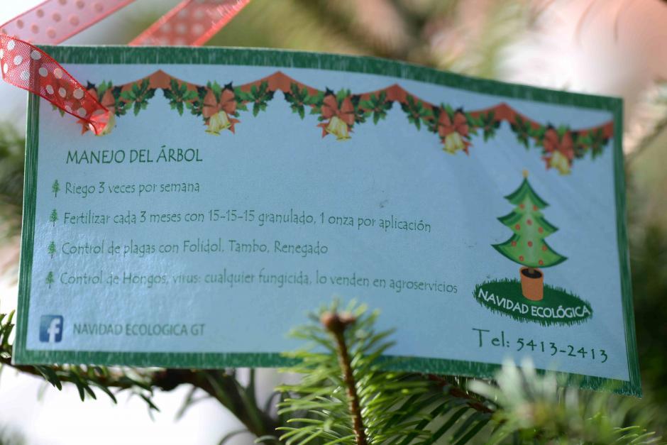 Además, puedes recibir las instrucciones de cómo cuidar tu pinabete en casa. (Foto: Wilder López/Soy502)