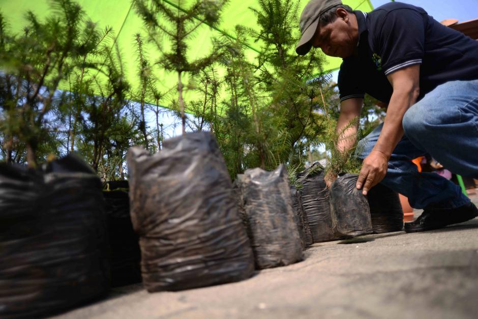 También puedes adquirir pilones para sembrar en tu hogar. (Foto: Wilder López/Soy502)