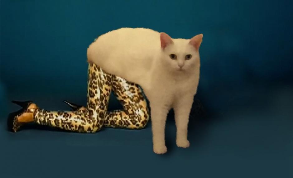 Algunos le pusieron piernas al gato, (Foto: mashable.com)