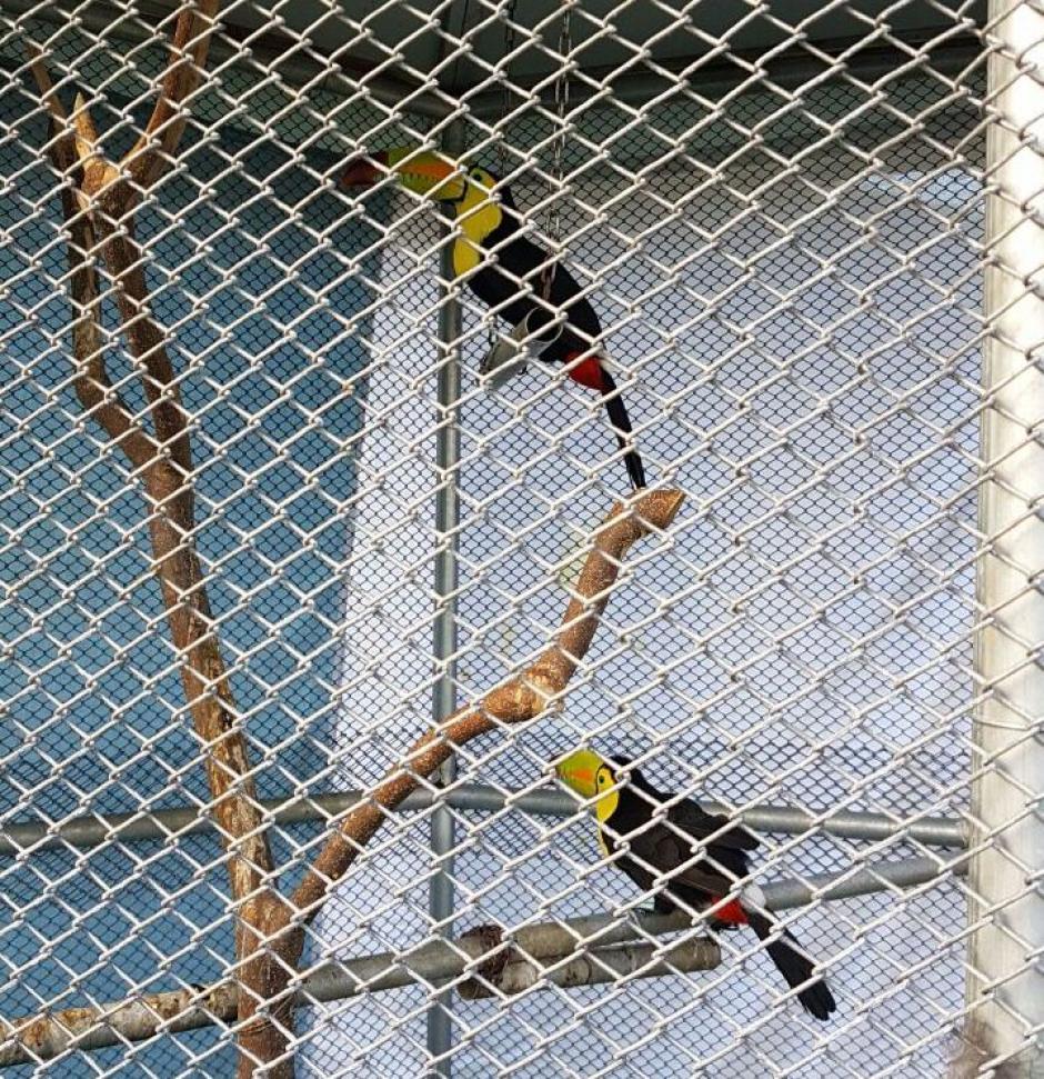 También se encontraron aves en peligro de extinción. (Foto: PNC)