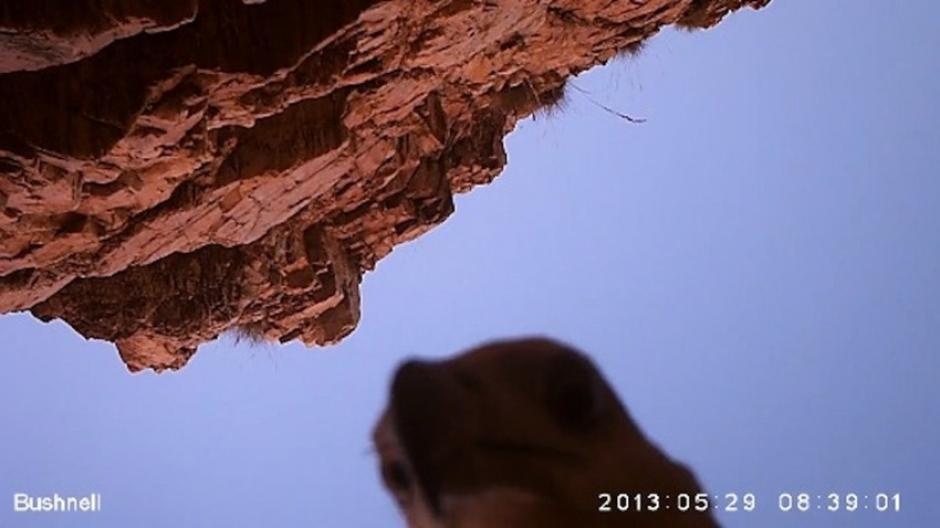 Un águila se roba una cámara y se graba en la región de Kimberley, Australia.