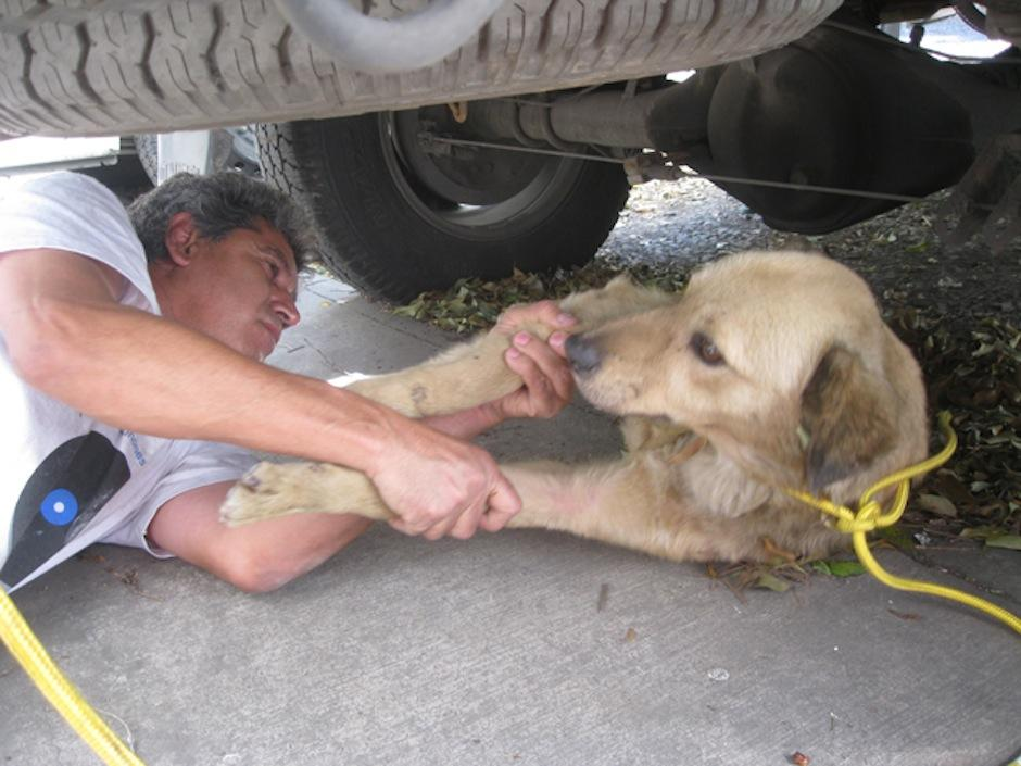 Con mucha paciencia fue tomado para darle ayuda. (Foto: AMA)