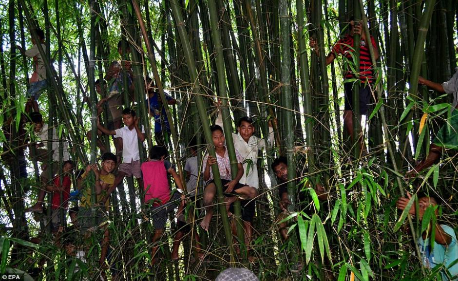 Cientos de indios observan y participan en el ritual del mamífero. (Foto: EPA)
