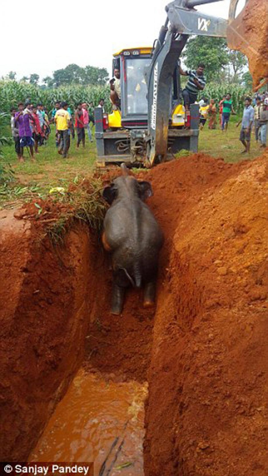 Con maquinaria pesada, los guardabosques rescataron al animal. (Foto: Daily Mail)