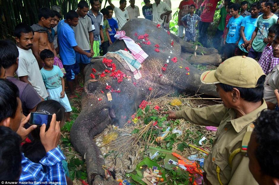 El elefante murió electrocutado tras tocar una valla de alta tensión no autorizada en la aldea. (Foto: AP)