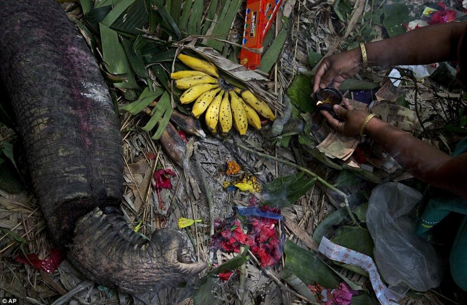 Una mujer sostiene una veladora al momento en que ofrece una oración por el elefante. (Foto: AP)