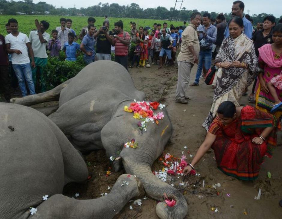 Los dos elefantes acompañaban a una manada de animales de la especie. (Foto: holaciudad.com)