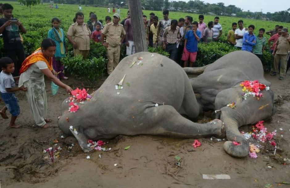 El segundo elefante murió al intentar rescatar a su compañero. (Foto: holaciudad.com)