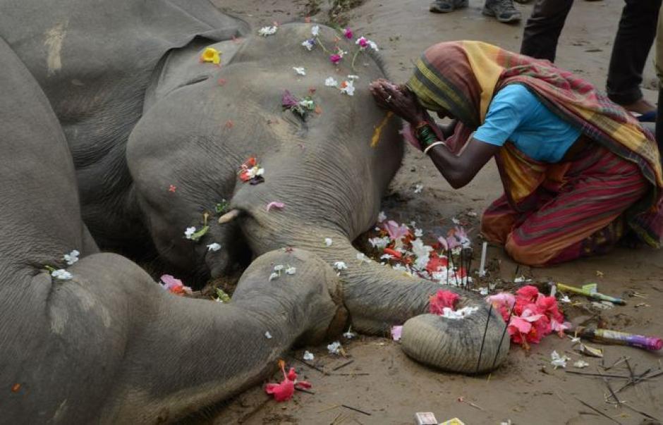 Ambos elefantes murieron electrocutados en la India. (Foto: holaciudad.com)
