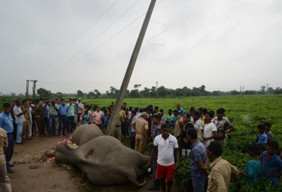 El accidente tuvo lugar en una ruta migrante de elefantes. (Foto: holaciudad.com)