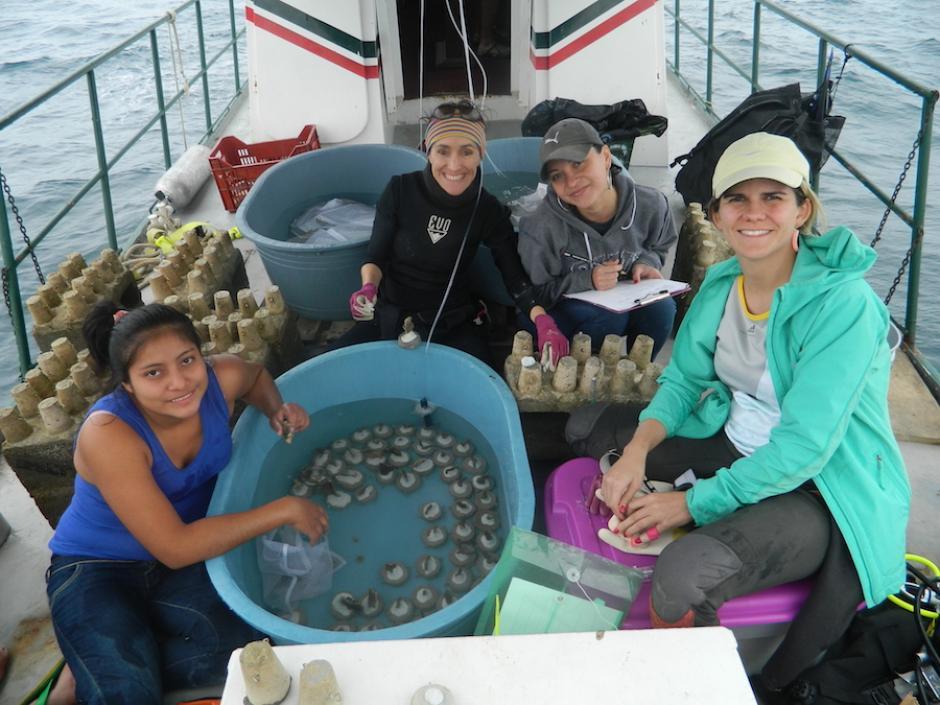 El equipo preparando fragmentos de coral para sembrarlos en los viveros. (Foto: Liderazgo SAM)