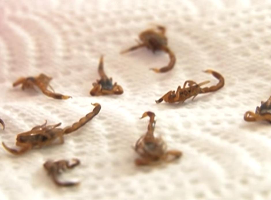 Incrustan escorpiones bebé en las uñas con todo y su aguijón. (Foto: Youtube)