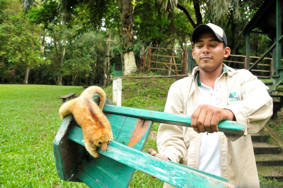Delegados del Inab y Conap hicieron una inspección del animal. (Foto: Rony Fidel Bac/Nuestro Diario)