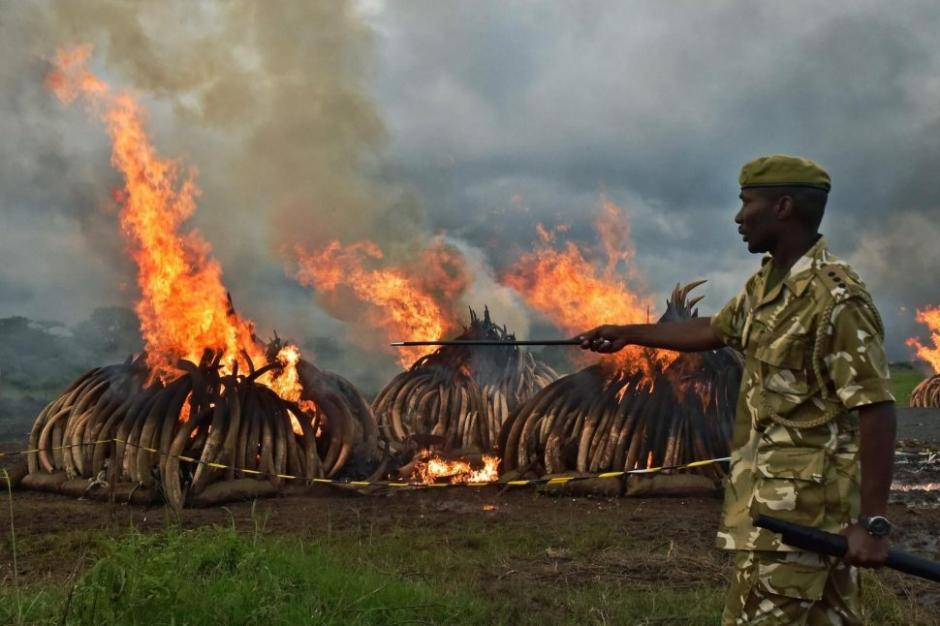 El presidente de Kenia prendió fuego a 105 toneladas de marfil. (Foto: AFP)