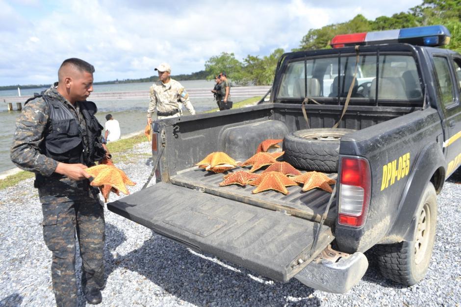 Según la PNC, el cargamento está valorado en más de 1 mil quetzales. (Foto: Carlos Cruz/Nuestro Diario)