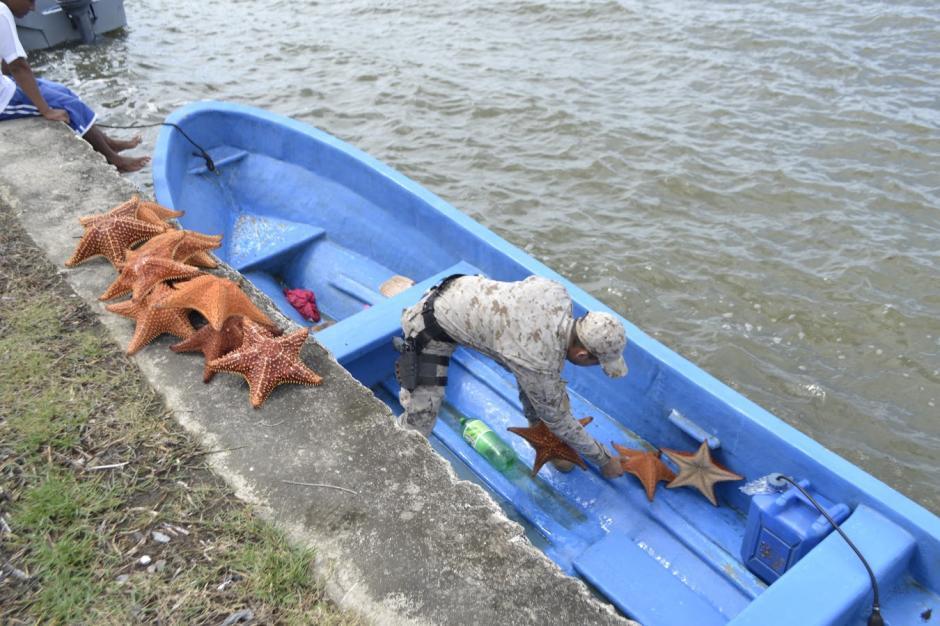 Cada estrella de mar es vendida entre 150 y 500 quetzales. (Foto: Carlos Cruz/Nuestro Diario)