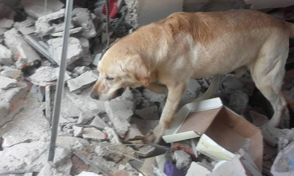 Dayko participó en labores de rescate por el terremoto. (Foto: Facebook/Bomberos de Ibarra)
