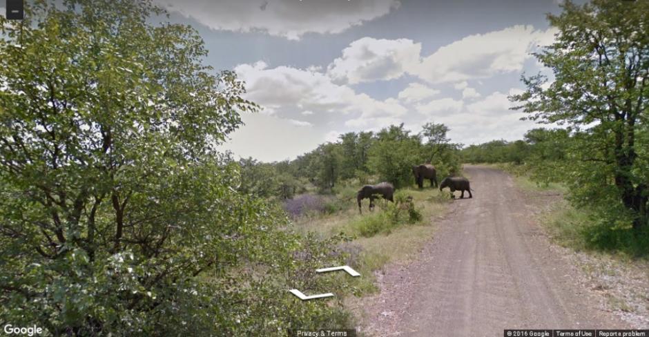 Al fondo se puede observar a una familia de elefantes. (Foto: Google)