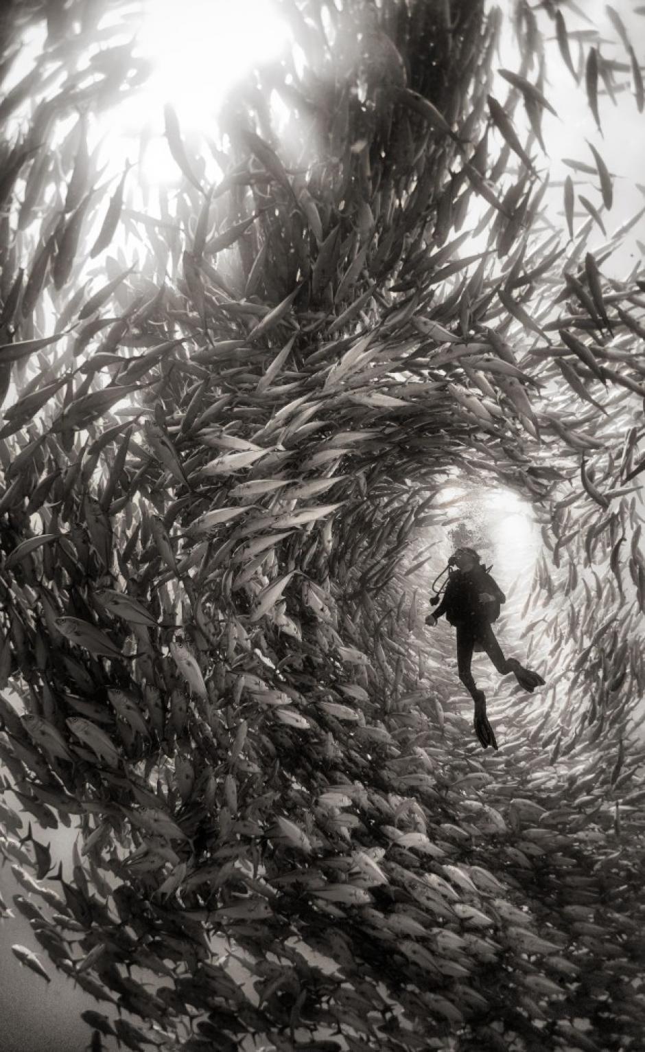 Un buzo es rodeado por un cardumen de peces en el Parque Nacional de Cabo Pulmo en México. (Foto: Anuar Patjane/National Geographic)