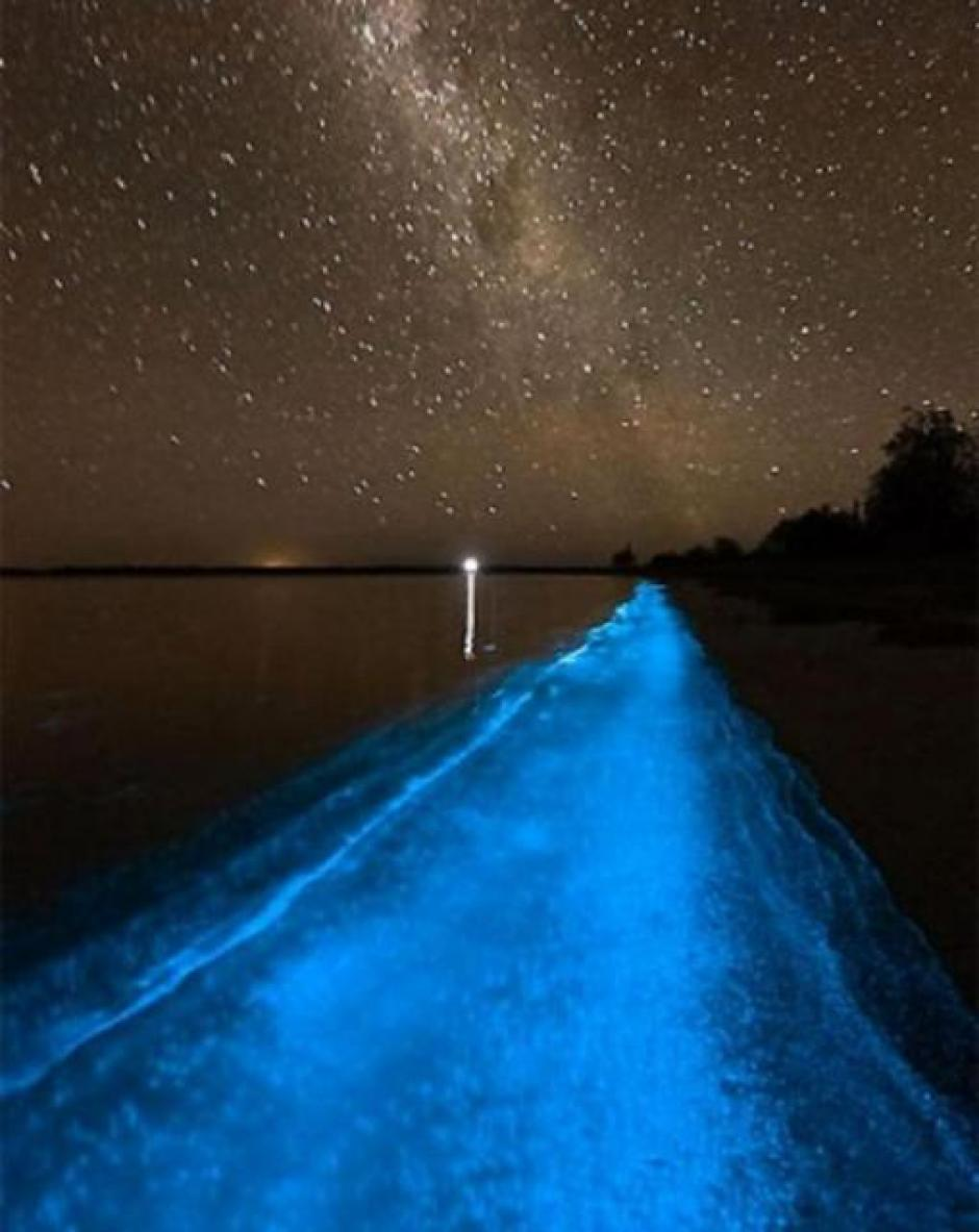 El brillo de las estrellas no pudo contra las luces de las algas del fondo del mar. (Foto: Archivo)