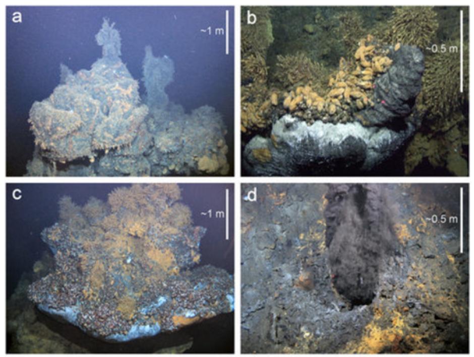 """Estos animales viven en """"chimeneas"""" en el fondo del océano Índico. (Foto: Infobae)"""